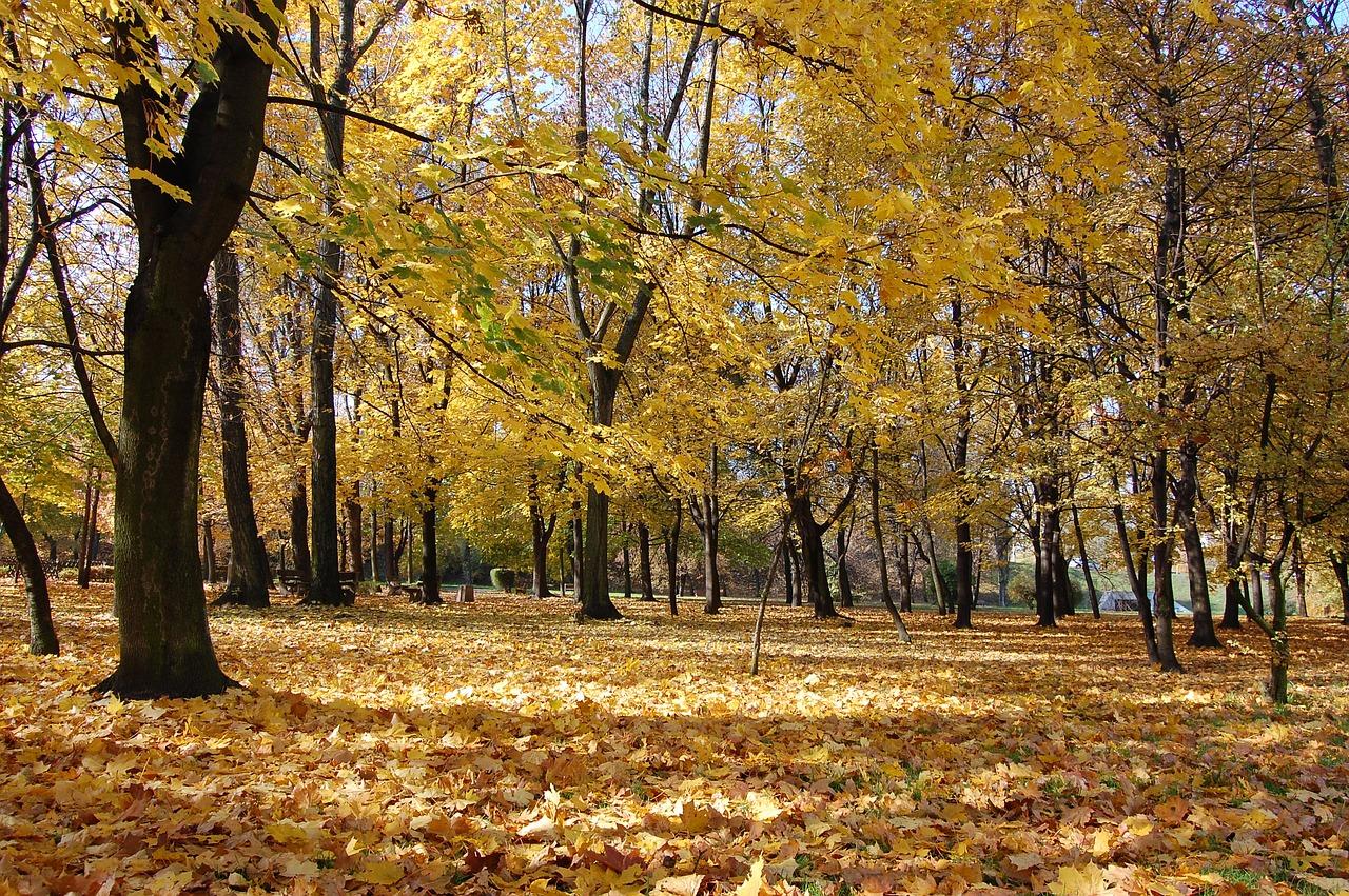 autunno-bosco-foglie-natura