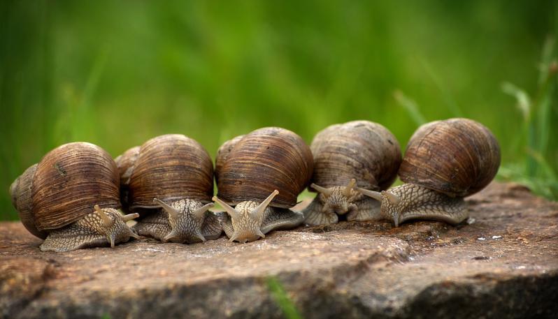 lumache-chiocciole-snail