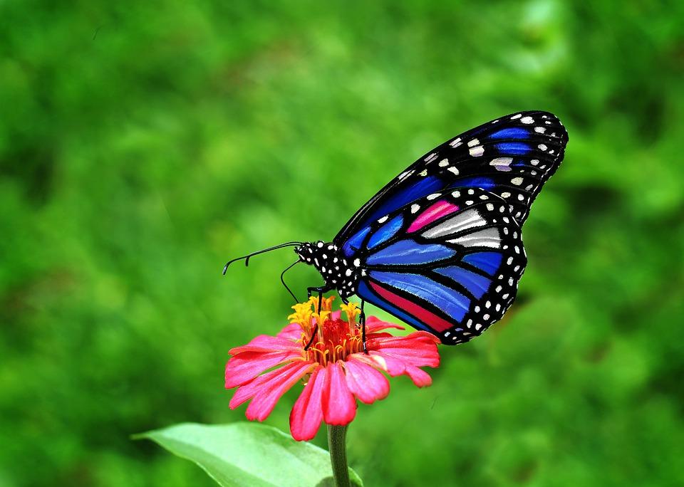 farfalla-su-un-fiore