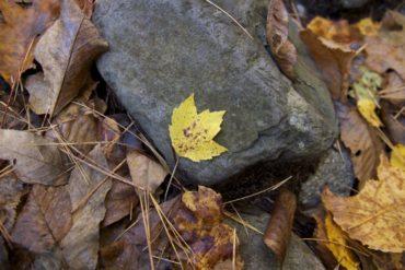 ottobre-foglia-pietra-autunno