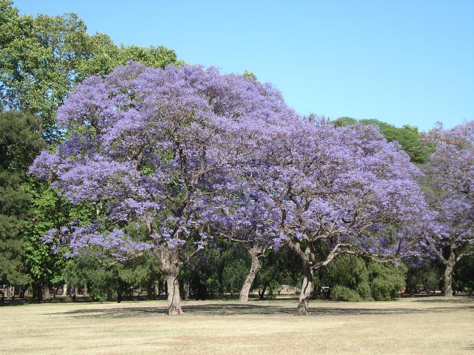 alberi-primavera